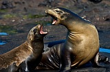 Vacation travel - Galapagos Sea vacations, picture #208
