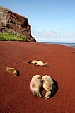 Vacation travel - Galapagos vacations, picture #20