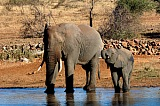 Vacation travel - Kruger Park - South Africa, picture #418