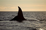 Vacation travel - Patagonian whale, picture #525
