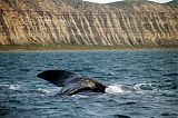 Vacation travel - Patagonian whales, picture #524