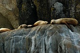 Vacation travel - Sea lions - Alaska, picture #404