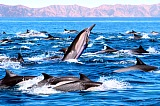 Vacation travel - Sea of Cortez dolphin patrol, picture #216