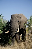 Vacation travel - South Africa elephant, picture #109
