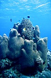 Vacation travel - Underwater adventure, picture #143