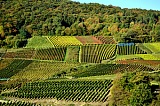 Vacation travel - Vineyard - Western Germany, picture #519