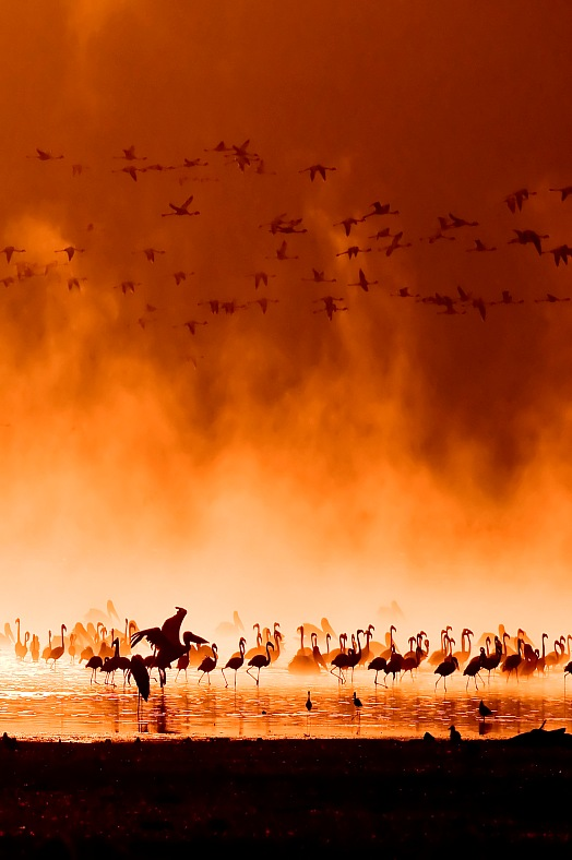 Africa tours Kenya. Flocks of flamingos in the sunrise. Lake Nakuru safari, Kenya travel Africa.