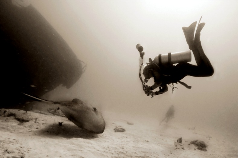 British Virgin Islands diving tours. Underwater photographer engaging a giant stingray off a wreck. British Virgin Islands diving vacations.