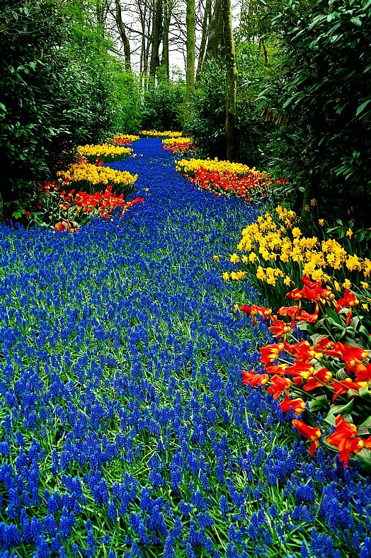Holland tours. Floral river field in Keukenhof. Netherlands vacation.