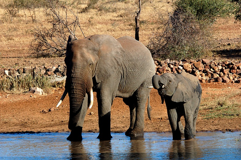 Kruger Park, South Africa - vacation travel photos