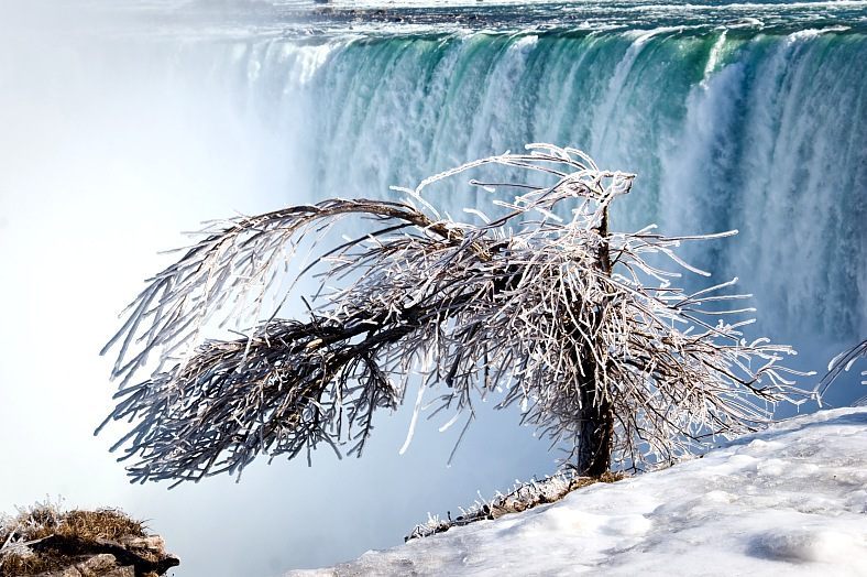 Niagara Falls tours. Tree covered by thick layer of iced mist, Niagara Falls Horseshoe at background. Niagara Falls packages - vacation travel photos