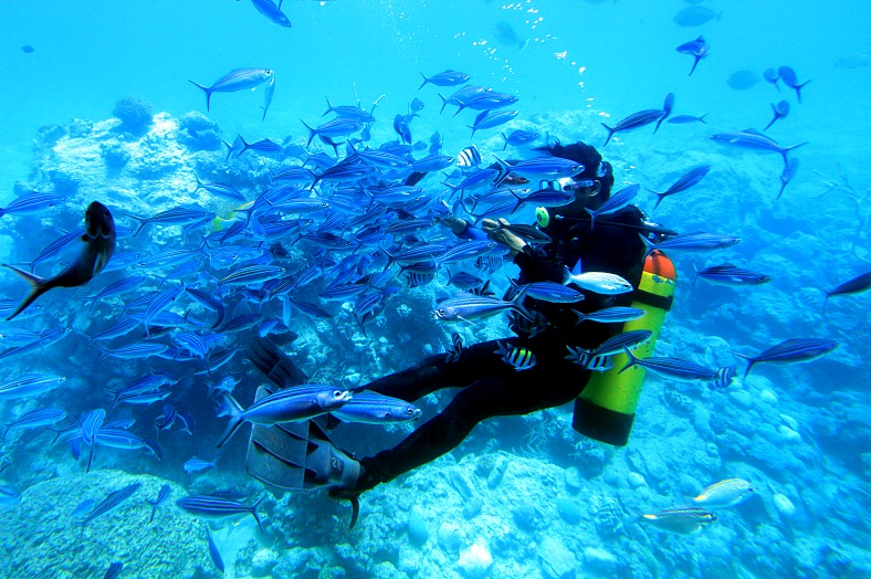 Red Sea diving excursions. Diver with shoal of fish. Egypt diving safari - vacation travel photos