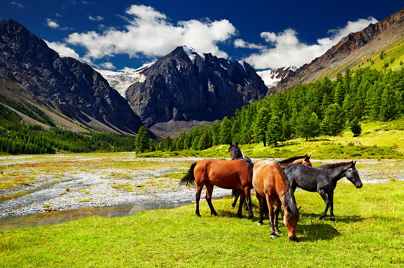 Russia tours. Siberia Altai mountains landscape with grazing horses. Russia vacations - vacation travel photos