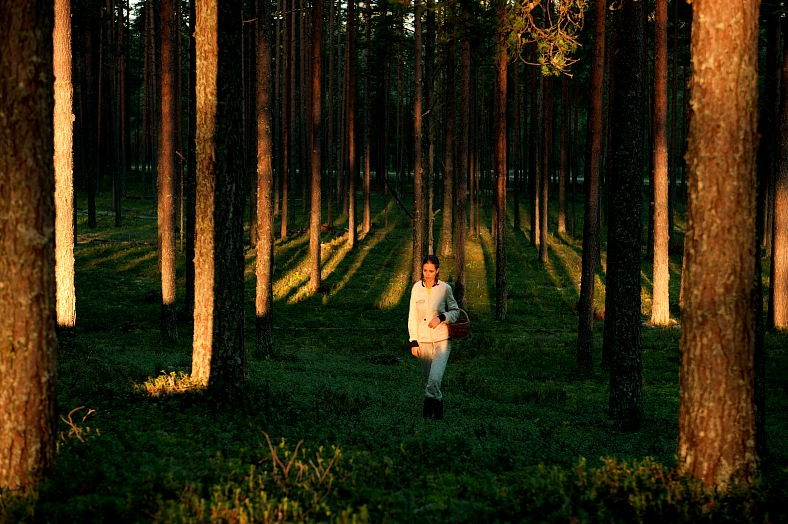 Russian Forest - vacation travel photos