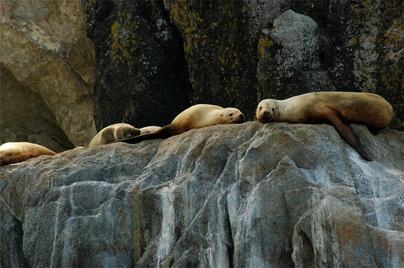 Sea lions, Alaska - vacation travel photos