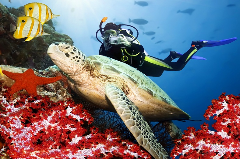 Sipadan diving holidays. Green turtle underwater on a coral. Celebes sea. Sipadan island tours