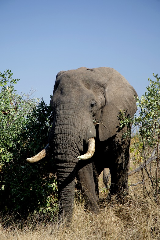 South Africa elephant - vacation travel photos