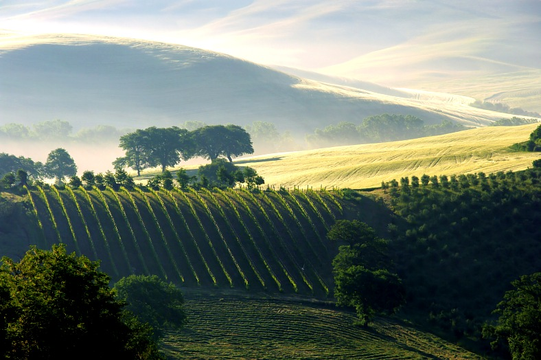 Italy travel packages - Tuscany, hills and vineyard in fog. Italy tours.